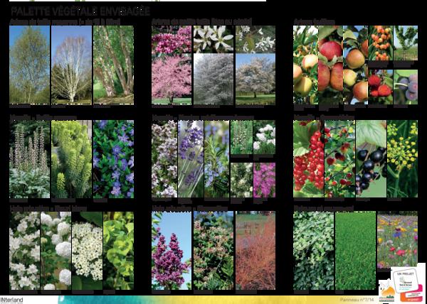 palette de végétaux envisagés
